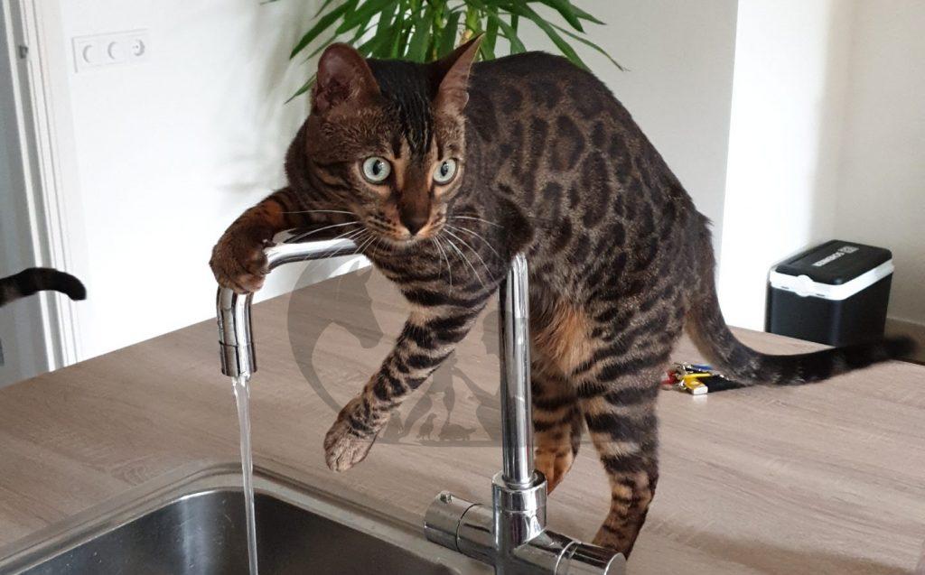 Dierverzorging/oppas aan huis